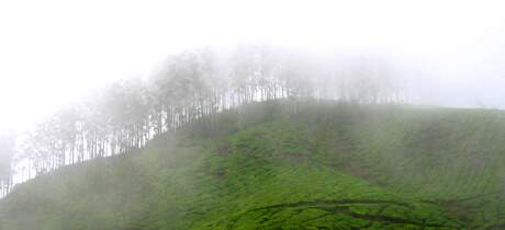 South West Monsoon in Kerala